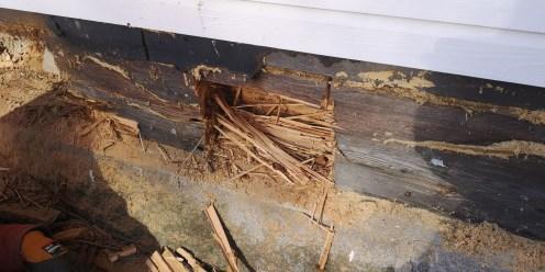 terveän näköisen pinnan alla piilee hevosmuurahaisen pesä