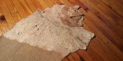 Sienikasvustoa seinän pellavakankaassa